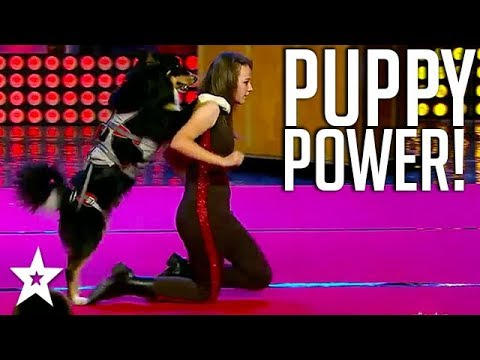 Amazing Super Dog Performance on Turkey's got Talent | Got Talent Global