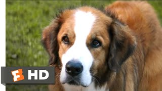 A Dog's Purpose (2017) - The Right Fit Scene (9/10) | Movieclips