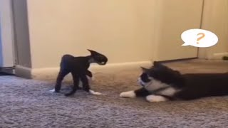 2 Funniest 😻 Cats and 🐶 Dogs - Awesome Funny Pet Animals Life Video