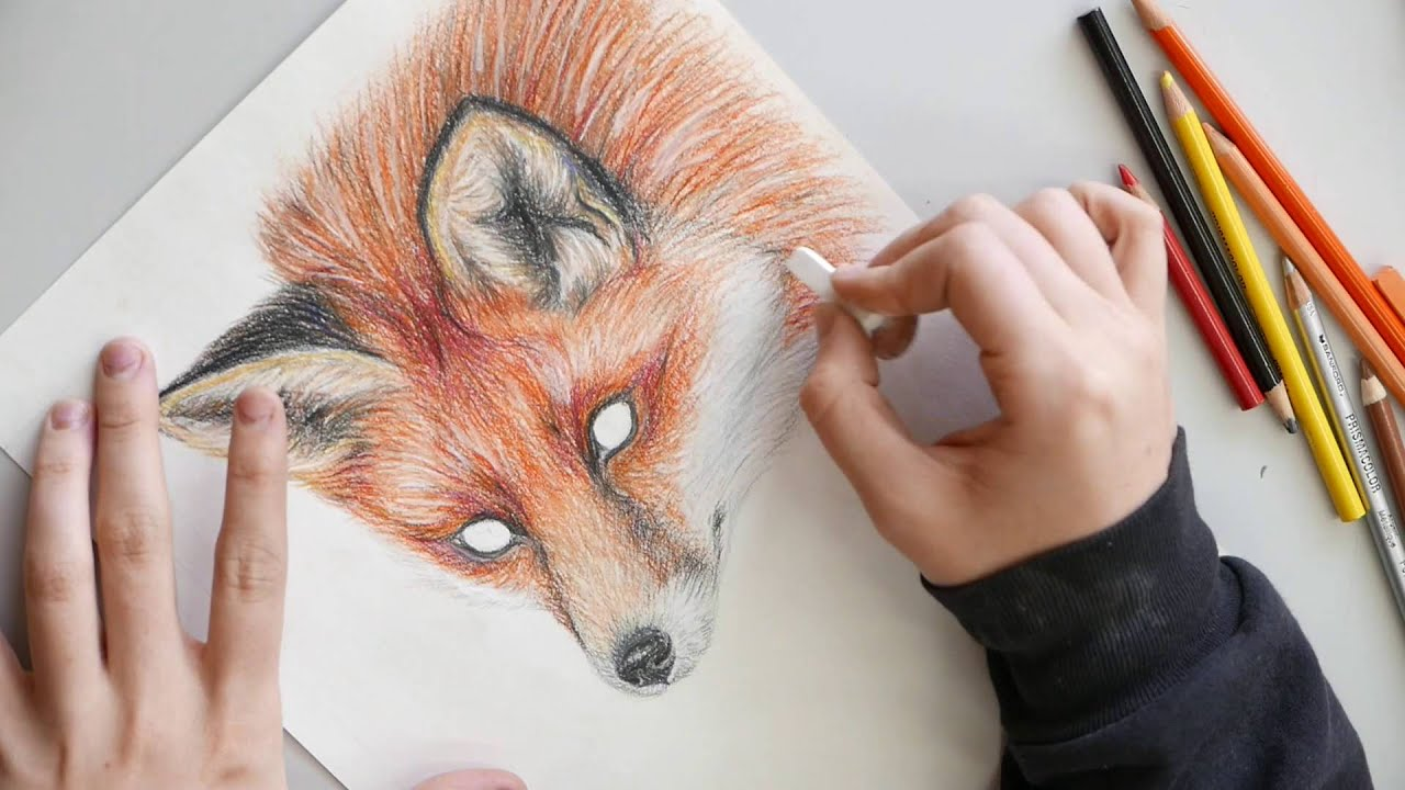 red fox colored pencil drawing youtube