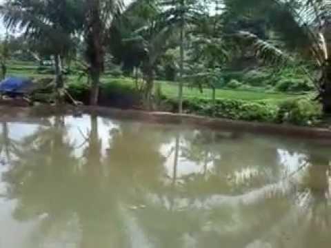 Membuat kolam air tawar Mp3