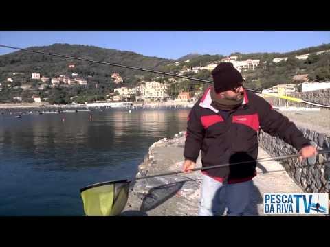 Orate a bolognese (pesca in mare)