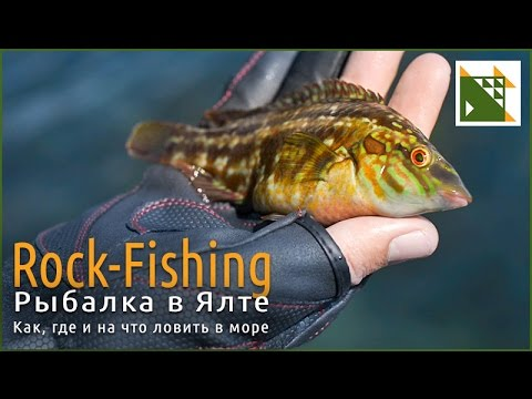 Морская рыбалка с берега. Рокфишинг в Ялте.