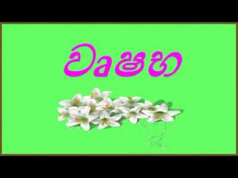 TAURUS -  Astrology  -   in Sinhala