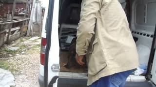 Изъятие собак-Балакалва.