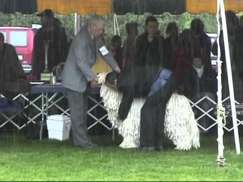 Trenton Kennel Club 2009 - Komondor