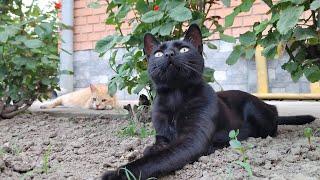 Relaxing Cat Video 171