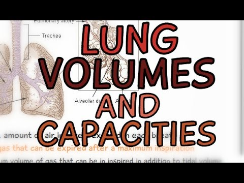 The Respiratory System: Lung Volume and Capacities
