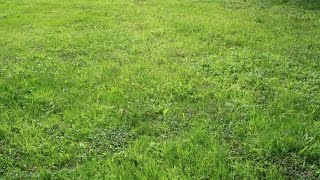 Grass Simulator Dubstep