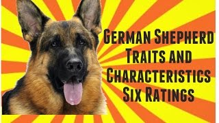 German Shepherd Dog Traits And Characteristics Six Ratings