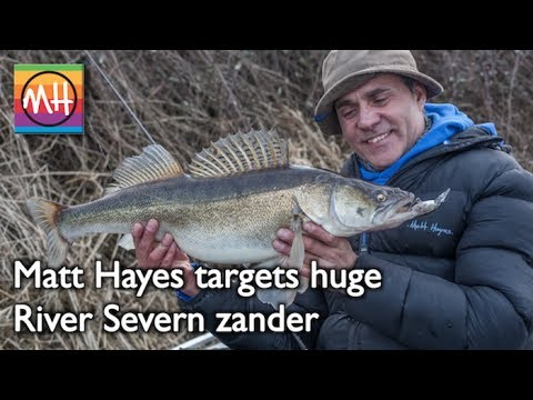 Learn superb predator tips as Matt Hayes catches double-figure zander from the River Severn