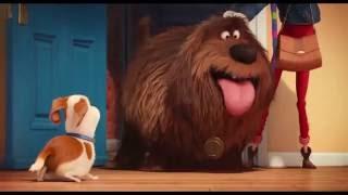 Gambar cover 🎥  Pets - A Vida Secreta dos Bichos - Trailer Oficial Dublado Filmes 2016 Comedia HD