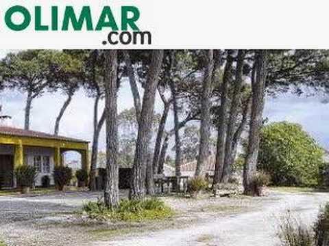 OLIMAR: Quinta da Torre Casal Pinhão