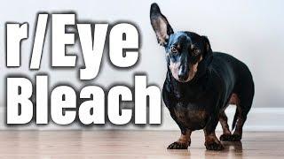 Pretty much just cute dogs   r/EyeBleach   Top Posts