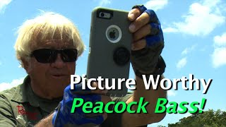 Incredible Topwater Peacock Action! In the Amazon