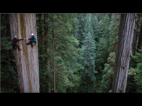 Amazing Dangerous Skills Fastest Big Tree Felling, Extreme Biggest Tree Cutting Down Machines