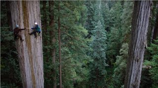 Amazing Dangerous Skills Fastest Big Tree Felling Extreme Biggest Tree Cutting Down Machines