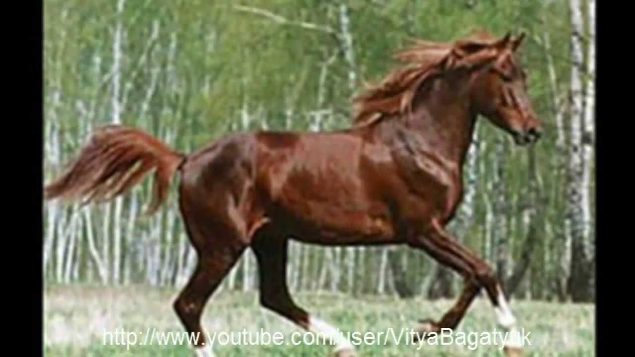 Подборка 7 самых красивых пород лошадей мира! - YouTube
