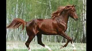 Подборка 7 самых красивых пород лошадей мира!