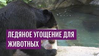 Ледяное угощение для животных