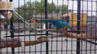 The animals of Camp Aventura: Safari Off Road Adventure, Six Flags Great Adventure