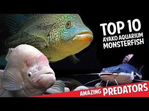 Top 10 Aquarium Monster Fish