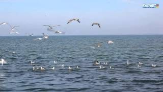 Керчь:  Птичья рыбалка.