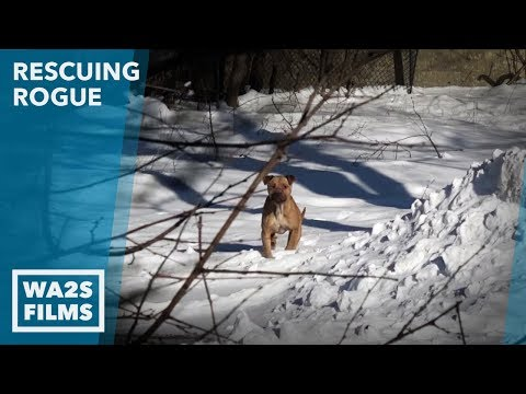 Detroit Pit Crew Saving Stray Dogs in Sub-Freezing Cold: #19 Rescuing Rogue NOT A Dog's Purpose!