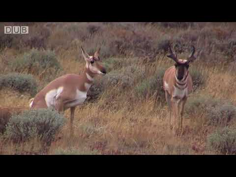 The Call of Nature - Animals Taking Craps