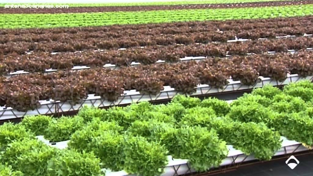 Alta tecnolog a aplicada a la agricultura youtube for Arboles enanos para jardin