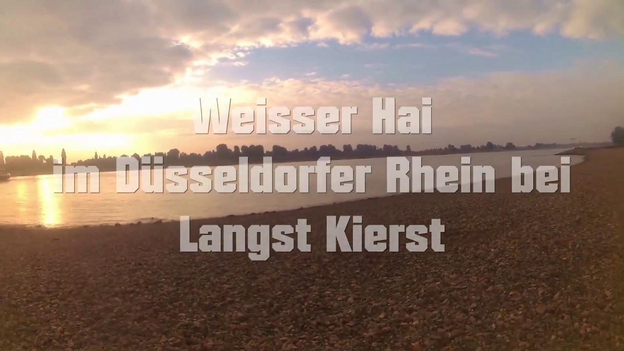 Hai Im Rhein