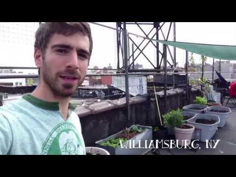 How to grow vegetables on your roof! Urban Roof Gardening in Brooklyn