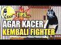 Menjaga Mental Kacer Agar Tetap Fighter Dr Kacer  Mp3 - Mp4 Download