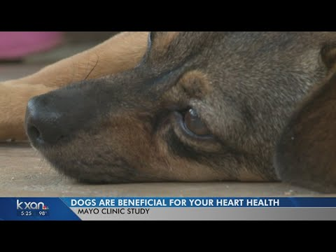 Study: Owning a pet, especially a dog, is good for your heart health