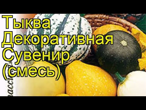 Тыква декоративная Сувенир (смесь). Краткий обзор, описание характеристик cucurbita pepo