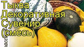 видео Тыква обыкновенная Cucurbita pepo