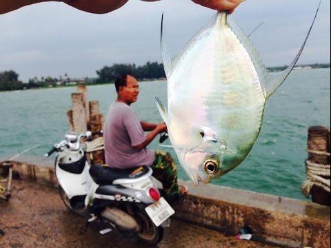 ตกปลาสะใจ สะพานปลาบ่อทองหลาง ได้เอา ได้เอา ฝูงปลานัดกันมากินเบ็ด