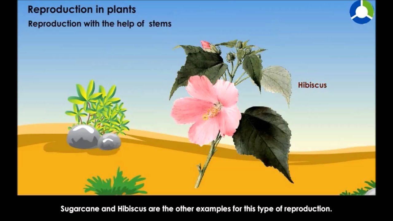 hight resolution of Reproduction in Plants - Interdependence between Living Things (CBSE Grade 5  Environmental Science) - YouTube