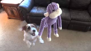 Jesse Goes Crazy for Zippy Paws! *Coupon Code in Description