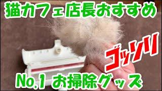 保護猫カフェを8年やってきて、本当にオススメの掃除用品を紹介します.