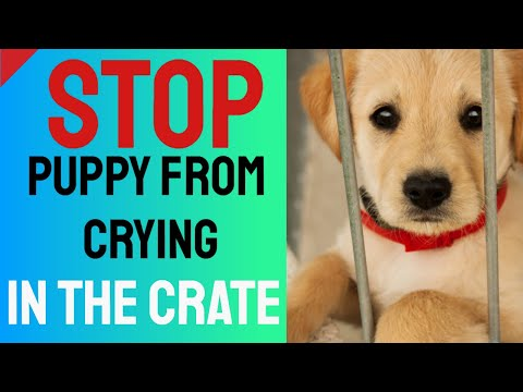 Stop Puppy From Crying In The Crate - Crate Training Tips