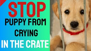 Stop Puppy From Crying in the Crate  Crate Training Tips