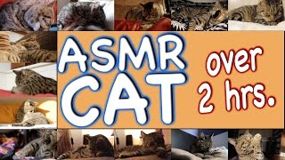 ASMR Cat - Super Compilation - 150 min.