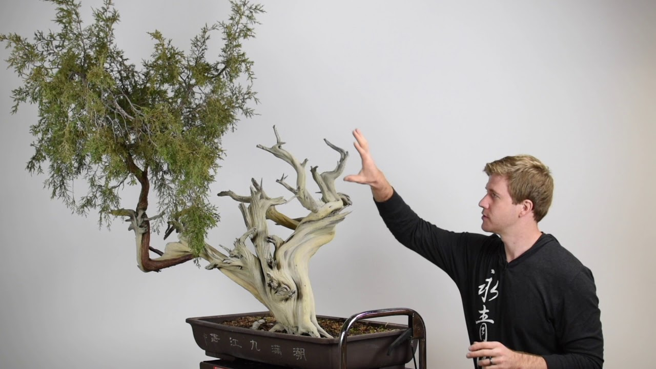 Bjorn Bjorholm Juniper Bonsai Styling Video