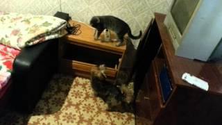 Собака Чика и кошка Изолента :-) Как живут вместе кот с собакой.