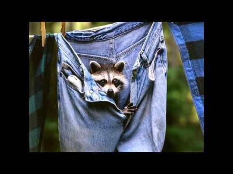 Женские стрейчевые джинсы New Jeans DY-121 - YouTube