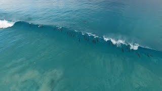 いつまでもいつまでも見ていたい!オーストラリアの青い海で、波と戯れるイルカたち