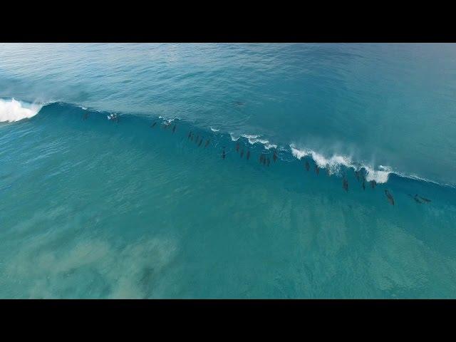 Dolphin Haze, Esperance Australia