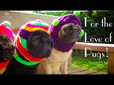 For the Love of Pugs - featuring bubblbeccapugs