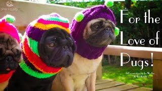 For the Love of Pugs full film 2015